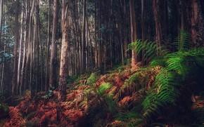Картинка лес, природа, папоротники