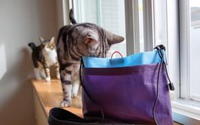 Картинка кошка, кот, стекло, свет, кошки, серый, комната, сиреневый, коты, две, пакет, окно, пара, подоконник, сумка, …