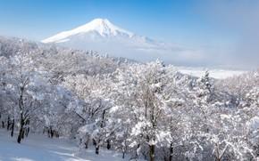 Картинка зима, лес, небо, снег, деревья, туман, гора, вулкан, Япония, Фудзияма, Fuji