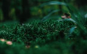 Картинка Природа, Растение, Растения, Nature, Grass, Flora, Plants, Флора, Plant, Close-Up, Irina Iriser, by Irina Iriser, …