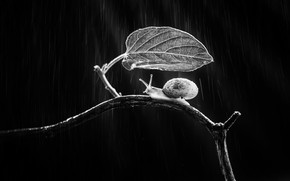 Картинка лист, дождь, улитка, ветка, rain, leaf, branch, snail, Andi Halil