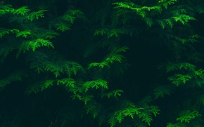 Картинка Green, Trees, Branch
