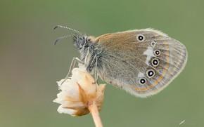 Картинка макро, фон, бабочка