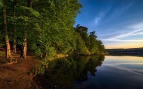 Картинка лето, озеро, парк, скамья