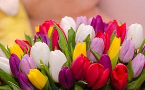 Картинка весна, тюльпаны, разноцветные