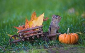 Картинка осень, трава, листья, природа, урожай, тыква, тележка, бурундук, деревянная, стойка, щечки