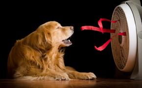 Обои дом, собака, вентилятор