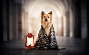 Картинка друг, лампа, собака, шарф