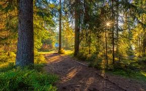 Картинка осень, лес, лето, солнце, лучи, свет, деревья, ветки, парк, стволы, куст, ели, дорожка, сосны, аллея, …