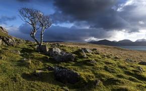 Картинка небо, облака, камни, дерево