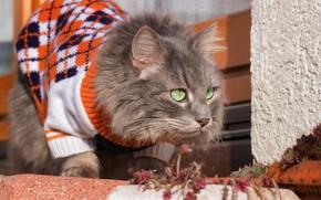 Картинка кошка, кот, одежда