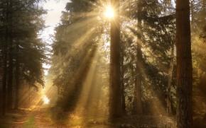 Картинка лес, солнце, лучи, свет, ветки, туман, утро, сосны, тропинка, бор, сосновый