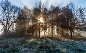 Картинка осень, Франция, утро, frozen, Савойя