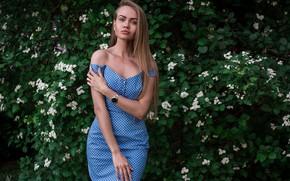 Картинка взгляд, листья, Девушка, платье, блондинка, Andrey Vechkenzin