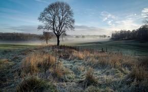 Картинка осень, природа, туман, дерево, утро