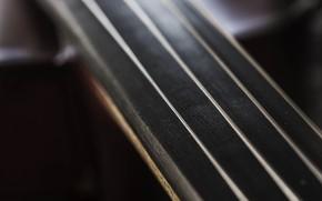 Картинка макро, струны, инструмент