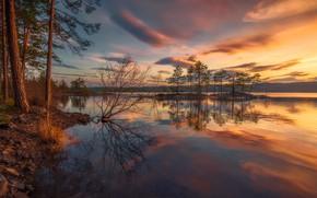 Картинка лес, небо, закат, озеро, Норвегия, Norway, Ringerike, Ole Henrik Skjelstad