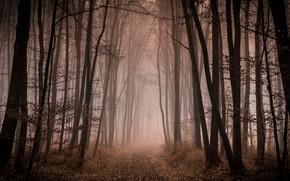Картинка осень, лес, деревья, ветки, туман, стволы, дорожка, аллея, тропинка, туманный
