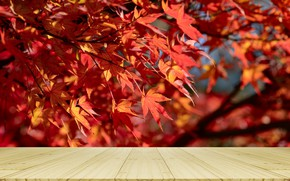 Картинка осень, листья, дерево, colorful, red, клен, wood, autumn, leaves, осенние, table, maple