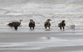 Картинка море, пляж, птицы, DUELL ©