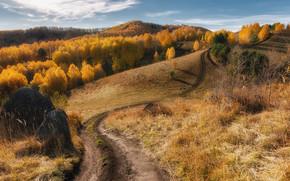Картинка дорога, осень, лес, горы, путь