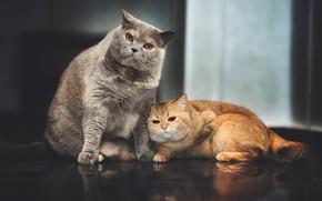 Картинка на полу, серый кот, рыжая кошка
