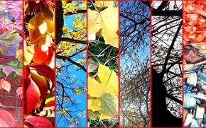 Картинка осень, листья, деревья, ветки, природа, рендеринг, коллаж, опилки на газоне, стадии осени
