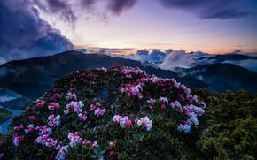 Картинка небо, облака, пейзаж, закат, цветы, горы, природа, туман, холмы, вершины, весна, вечер, Азия, Тайвань, сумерки, …