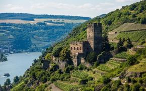 Картинка река, замок, Германия, Рейн, Гутенфельс, Burg Gutenfels