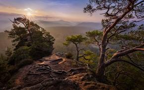 Картинка лето, небо, солнце, лучи, свет, деревья, горы, ветки, природа, корни, туман, камни, скалы, рассвет, холмы, …