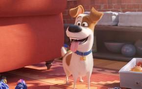 Картинка язык, радость, собака, пёс, Тайная жизнь домашних животных 2, The Secret Life of Pets 2