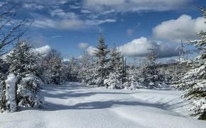 Картинка зима, иней, лес, небо, облака, свет, снег, пейзаж, природа, синева, зимний, вид, ели, сугробы, тени, …