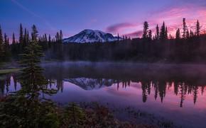 Картинка лес, небо, горы, отражение, берег, вечер, ели, США, сумерки, водоем, национальный парк, сиреневое небо, Маунт-Рейнир