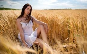 Картинка лето, девушка, платье, колосья, ножки, Александр Пархоменко