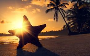 Картинка солнце, лучи, закат, тропики, пальмы, океан, берег, звезда, тень, вечер, Valentin Valkov