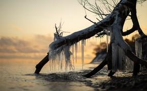Картинка корни, река, лёд