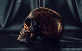 Картинка Skull Study, зубы, узоры, череп, материал
