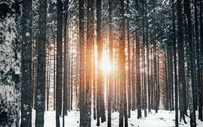 Картинка зима, лес, солнце, свет, снег, деревья, природа