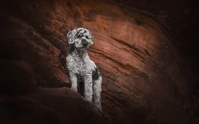 Картинка природа, гора, собака