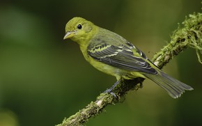 Картинка взгляд, птица, зелёный фон
