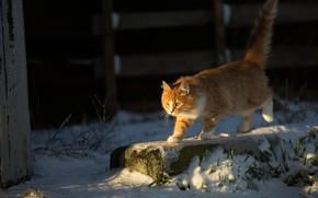 Картинка зима, кошка, взгляд, снег, поза, котенок, фон, рыжий, прогулка, котёнок