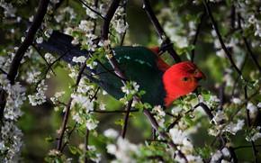 Картинка цветы, ветки, темный фон, птица, весна, попугай, цветение