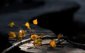 Картинка ветка, размытый задний фон, осенние листья