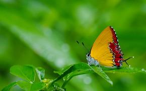 Картинка трава, природа, бабочка, мотылек