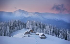 Картинка зима, лес, снег, горы, дом, Карпаты, Mike Remeniuk