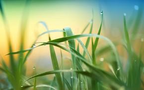 Картинка лето, трава, природа, луг