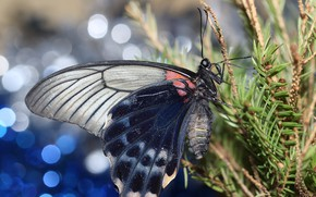 Картинка ветки, фон, бабочка, крылья, ель, боке