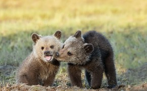 Картинка лето, природа, медведи