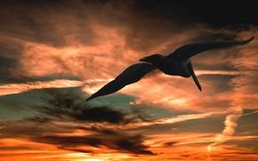 Картинка небо, облака, полет, закат, тучи, птица, краски, небеса, крылья, размах, пеликан, крупная