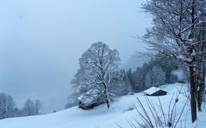 Картинка зима, лес, снег, деревья, горы, синева, Швейцария, склон, домики, сумерки, Braunwald